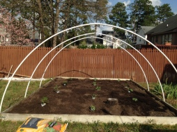 Planting Day (April 10, 2015)